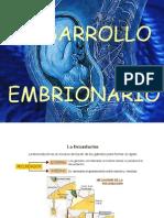 Desarrollo embrionario extrasuperexelente