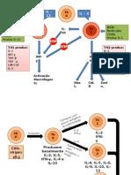 Diferenciação Células T