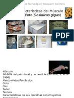 Características Del Músculo de Pota(Dosidicus Gigas)