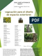 Exposicion de arboles del estado de tabasco.pptx