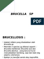 Brucella Sp