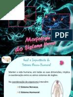morfologia_sistema-nervosol.pdf