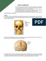 Anatomia Región Occiptofrontal