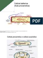 Tir Cell Batterica 2012