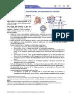 Embriologia 02 - Spermatogenesi, fecondazione e prima settimana.pdf