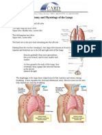 Lung Anatomy Physiology