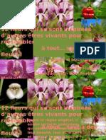 OrchideeS_etranges_Delia-1.ppsx