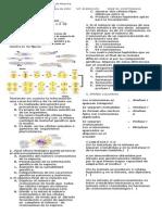 EVALUACION meiosis 2015.docx