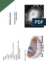Céleucariótica2015.PDF