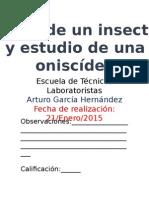 Partes de Un Insecto y Estudio de Una Oniscídea