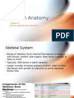 Ch.8 - Axial & Appendicular Skeleton