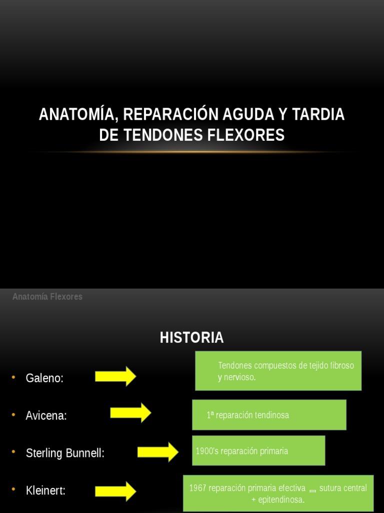 Lesion de Tendones Flexores. Cirugía de mano.