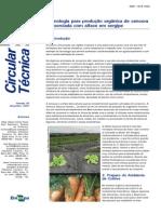 Produção Orgânica de Cenoura Consorciada Com Alface - Embrapa - Ct-50