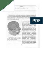 2.Anatomia Topografica a Capului