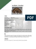 ball python - caresheet