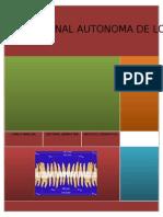 DISCREPANCIA DEL TAMAÑO DE LOS DIENTES