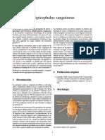 garrapatas  Rhipicephalus sanguineus