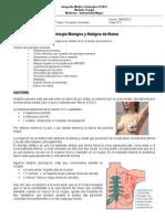 02. (18!05!2012) Patologia de Mama b y m