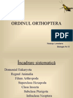 ORDINUL ORTHOPTERA