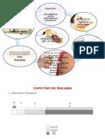 Cadena Epidemiológica y Espectro-MALARIA.