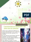 Estructura y Función de Hongos y Plantas
