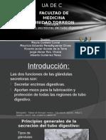Fisio 2 Funciones Secretoras Del Tubo Digestivo