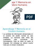 Aprendizaje Y Memoria en El Cerebro Humano