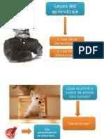 Leyes de Pavlov