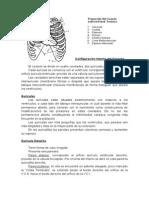 Config Interna del Corazón.doc