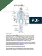 Sistema Nervioso Somático - Psicología