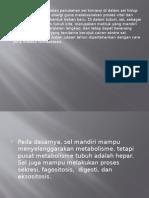metabolismen.pptx