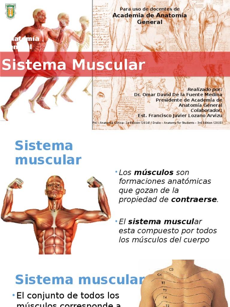 Increíble Realizado Por La Anatomía Modelo - Anatomía de Las ...