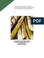 Documento Cana de Azucar 2013-2014