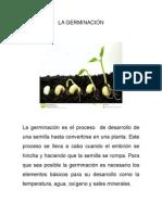 LA GERMINACIÓN.docx