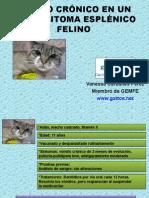 Vomito Mastocitoma Esplenico Felino