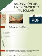 Valoración Del Funcionamiento Muscular