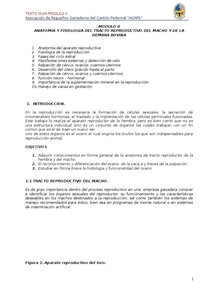 FISIOLOGIA REPRODUCTIVA DEL GANADO BOVINO