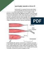 Muscle Hypertrophy II