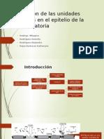 Uniones Estrechas de Células Dendríticas en El Epitelio HISTOLOGIA