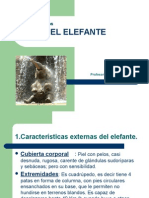 claudiaorellanaelelefante-111119124347-phpapp02