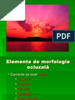 morfologie ocluzala (1)