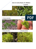 Briofitele incluse în Cartea Roșie a Republicii Moldova