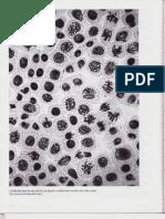 Capítulo 17 - El ciclo de división celular