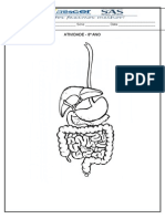 Atividade - Sistema Digestório