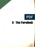 FORELIMB de Ashdown Caballo