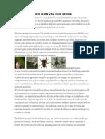 Reproducción de La Araña y Su Ciclo de Vida