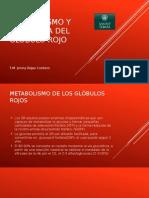 Metabolismo y Membrana Del Glóbulo Rojo