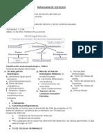 Patologia de Testiculo y Prostata