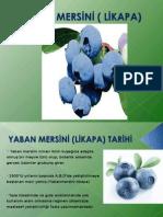 1111__yaban_mersini