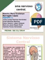 Sistema Nervioso, Escoliosis y Lordosis